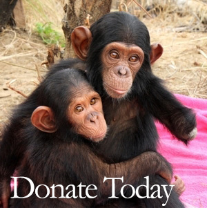 Donate to JGI UK today